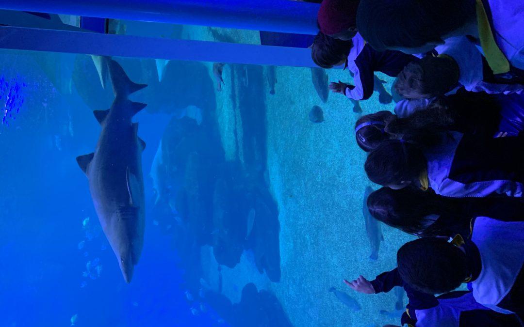 2n Ei – Excursió Palma Aquarium
